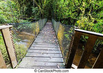 森林, 橋