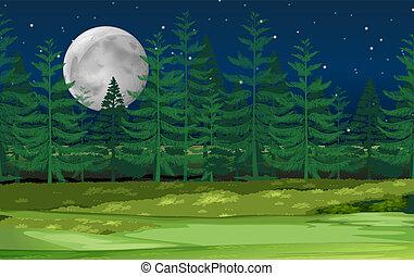 森林, 風景, 夜