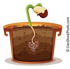 植物の 鍋, 粘土, 成長する