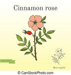植物, シナモン, バラ, 香水