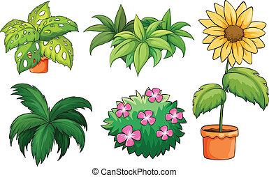 植物, フラワーポット