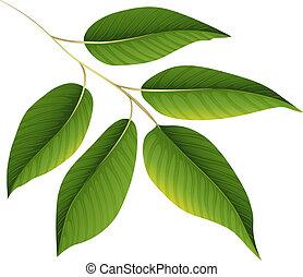 植物, 緑は 去る