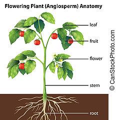 植物, 部分