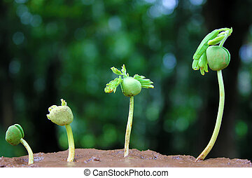 植物, growth-baby, 植物