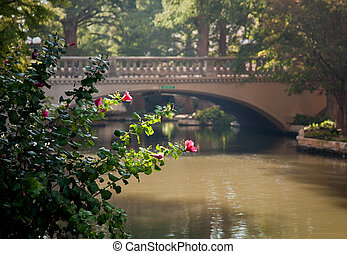 橋, サン・アントニオ, 明るい, 前部, 花, 赤