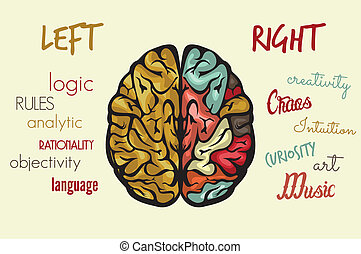 機能, 脳