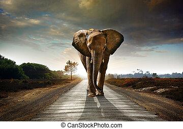 歩くこと, 象