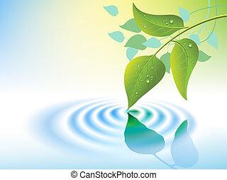 水さざ波, 葉