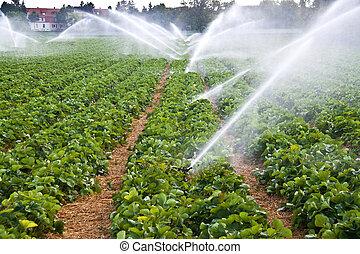水スプレー, 農業