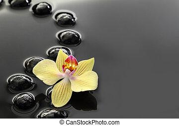 水, 禅, 黒い背景, 石, 蘭, 冷静