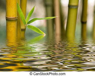 水, 竹, 反射