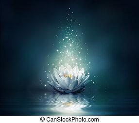 水, waterlily, fairytale, -