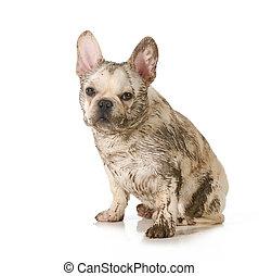 泥だらけである, 汚い, 犬