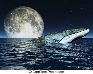 海, フルである, クジラ, 表面, 月