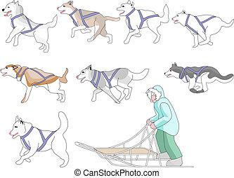 混合, musher, 犬, マッチ, n