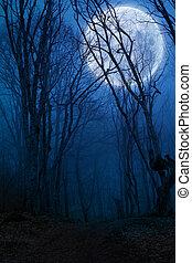 満月, 暗い, 森林, 夜, agaist