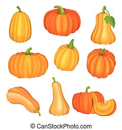 滑らかである, オレンジ, ベクトル, 明るい, わずかに, カボチャ, からかわれた, 皮膚, セット