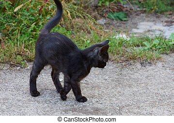 灰色, わずかしか, 立つ, 緑, 子ネコ, 黒, 草, 道