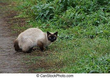 灰色, ブラウン, 座っている猫, 見る, 草, 道