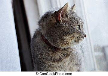 灰色, 窓台, 座っている猫, 見る, 窓, から
