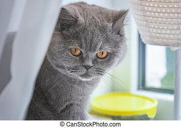 灰色, 窓, 猫の世話