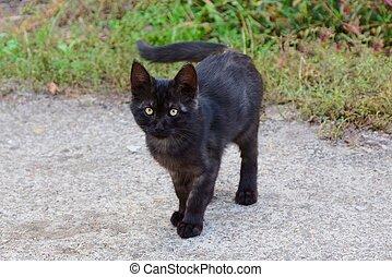 灰色, 立つ, 1(人・つ), 通り, 黒, 子ネコ, 小さい, 緑の草, 道