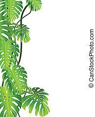 熱帯 植物, 背景