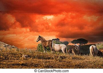 牧草, 馬, 日没