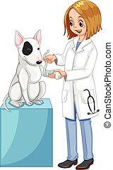 犬, 獣医, 足, 包むこと