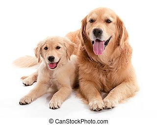 犬, buddys