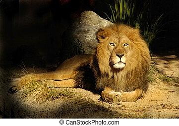 王, ライオン, セージ
