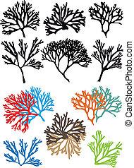 珊瑚, ベクトル, セット, 砂洲