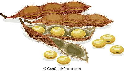 現実的, ベクトル, soybean., illustration.