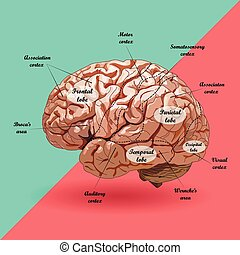 現実的, 案, 人間の頭脳