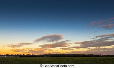 田舎, はげ, 木, 曇り, sky.