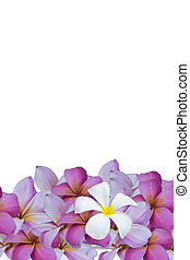 白い花, 背景