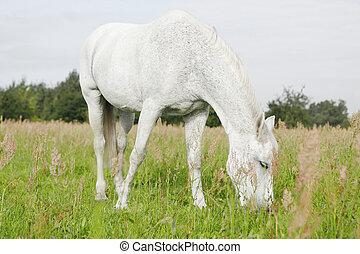白い馬, フィールド