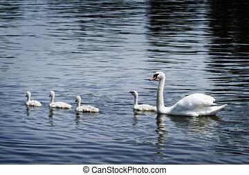 白鳥, 家族