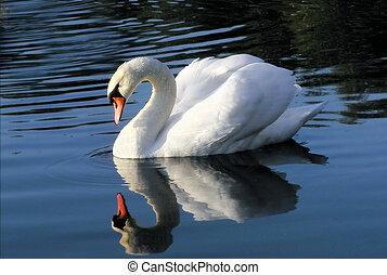 白鳥, 鏡