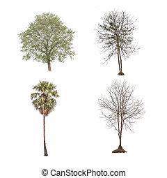 白, セット, 木, 隔離された, コレクション