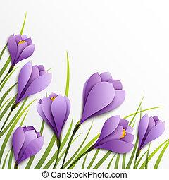 白, ペーパー, crocuses., 花, 背景