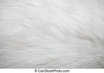 白, 毛皮, 手ざわり, 背景