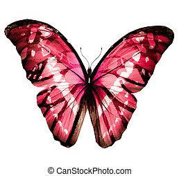 白, 隔離された, 蝶色, 背景