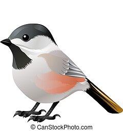 白, 黒い鳥, 先頭に立たれる