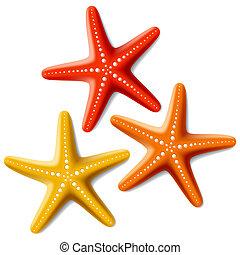 白, starfishes, 3