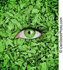 目, 中央, 葉, 緑