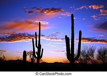 砂漠, 日没, saguaro