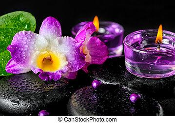 禅, 玄武岩, lila, 花, 低下, 石, 概念, 蘭, エステ