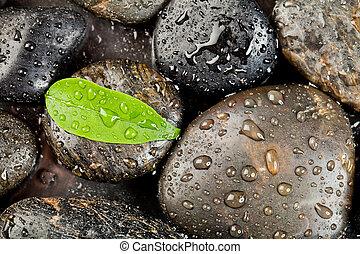禅, freshplant, 石, 低下, 水