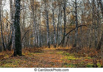 秋, 日没, 森林
